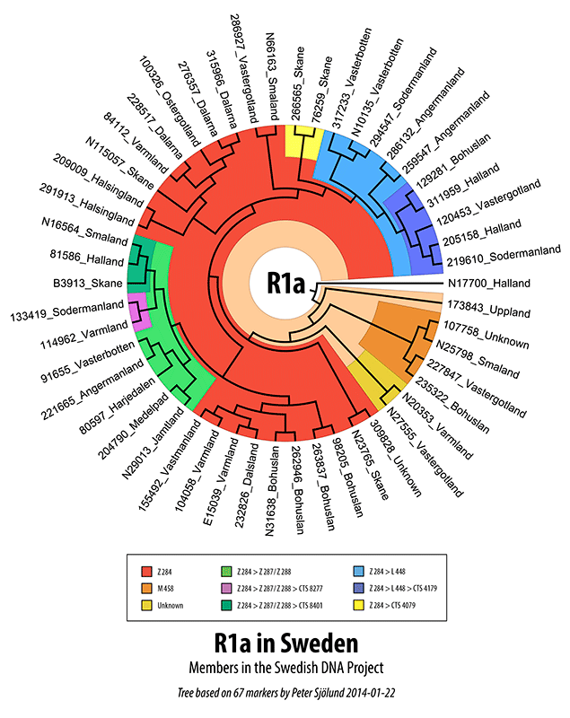 Swedish R1a DNA tree
